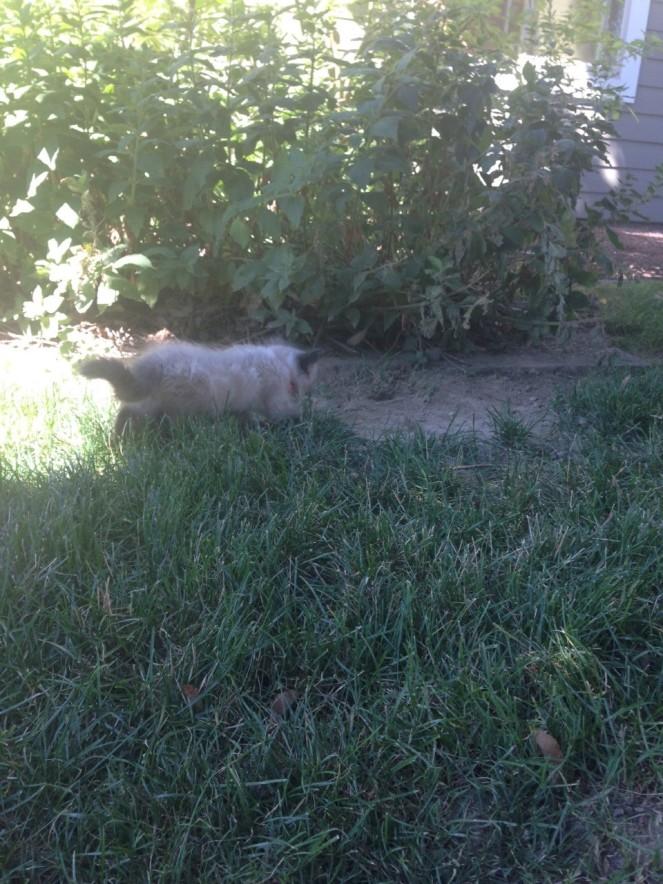 chapo on grass