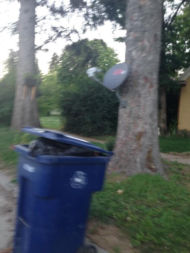 satellite on tree