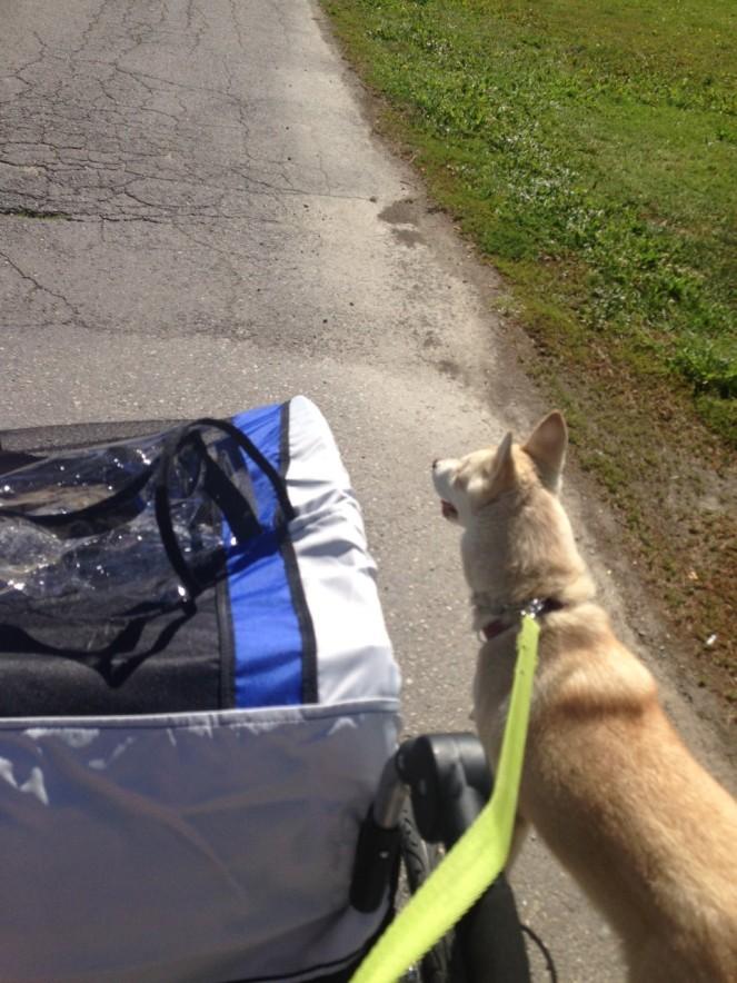 walking new stroller