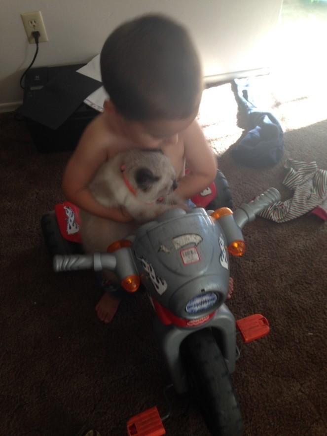 chapo bike